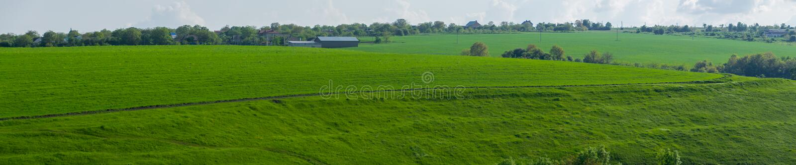 Green agricultural field in spring royalty free stock photos