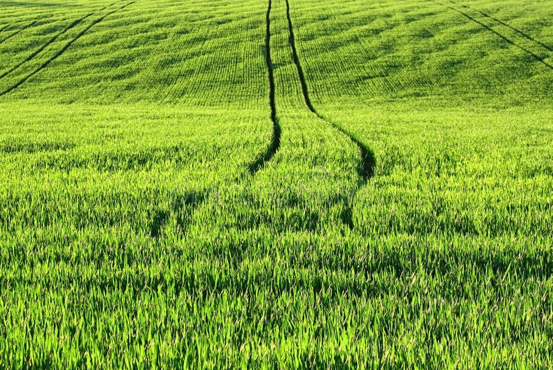 Download Green agriculture field stock photo. Image of flora, healthy - 9703320