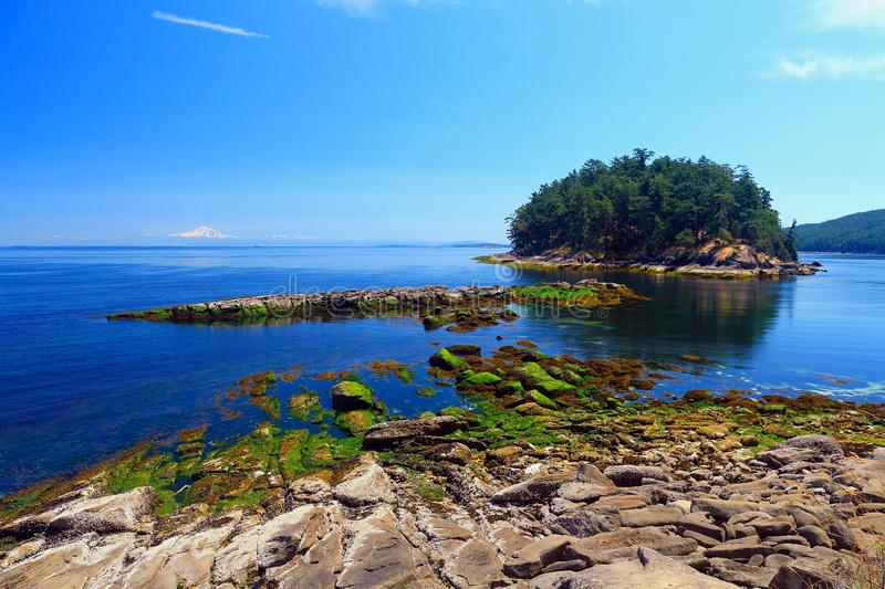 Green Algae on Boulders at Campbell Point, Bennett Bay, Gulf Islands National Park, British Columbia, Canada. Low tide exposes the seaweed covered rocks at stock image