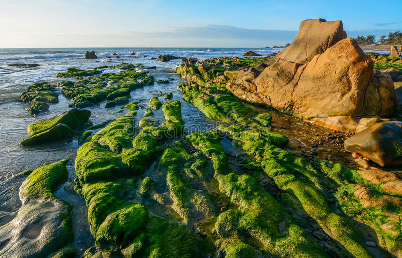 Green algae on a rock in the middle of the sea. South China Sea in Vietnam stock photo