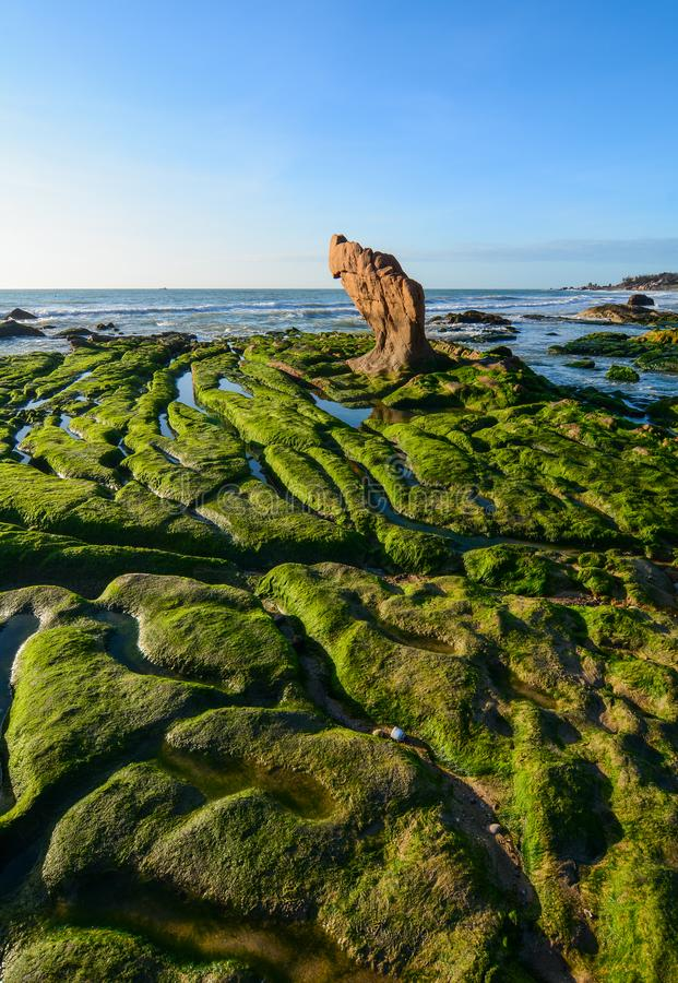 Green algae on a rock in the middle of the sea. South China Sea in Vietnam royalty free stock photo