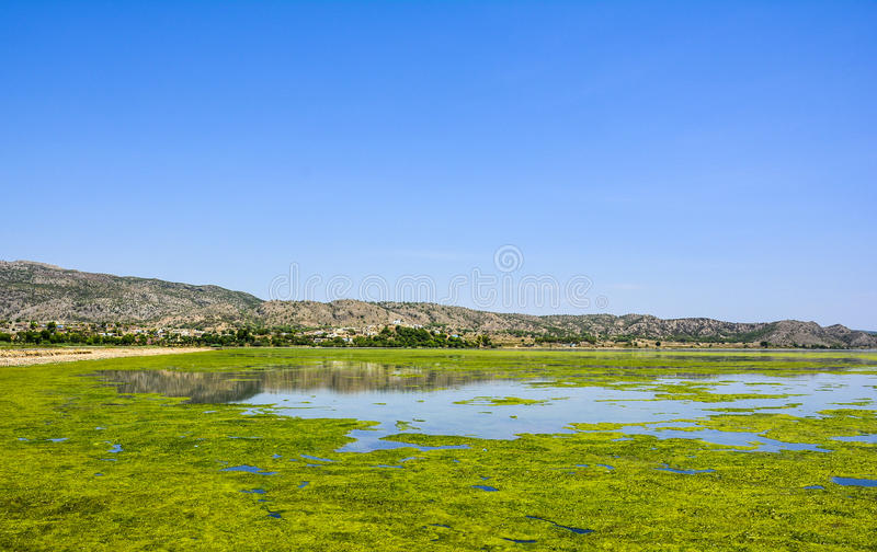 Green algae on the surface of Uchali Lake stock images