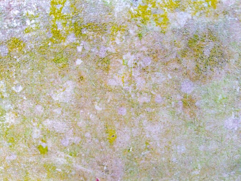 Green Algae Texture on Wall royalty-vrije stock foto