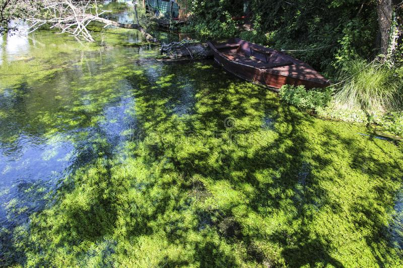 Green algae under water, Lake Ohrid, Republic of North Macedonia. Green algae under water, algae on the rocks in a clear water on the beautiful Lake Ohrid stock photo