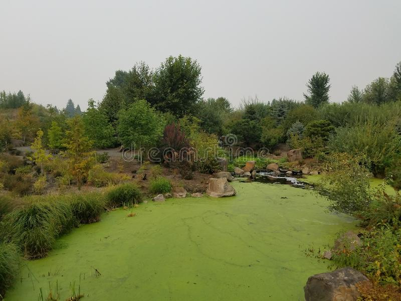 Green algae on water in pond with brown and green grasses. And plants stock photo