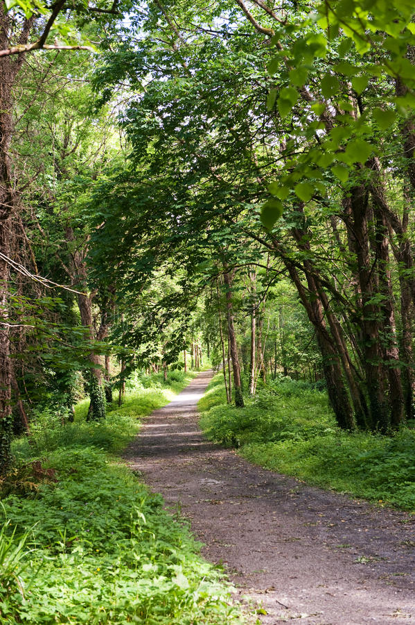 Download Green Alley in the park stock image. Image of path, nobody - 19796081