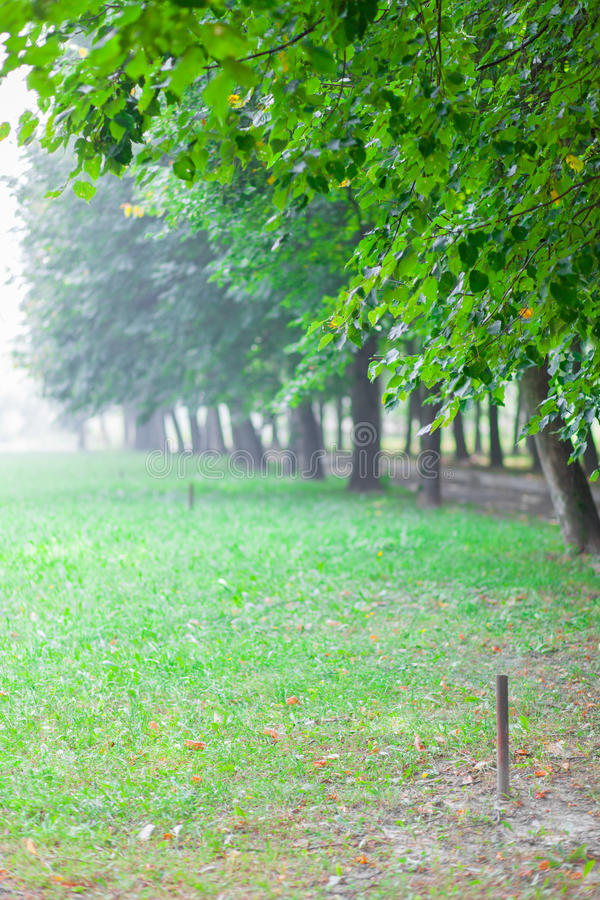 Download Green Alley In Summer Park At Morning With Fog Stock Photo - Image: 30277128