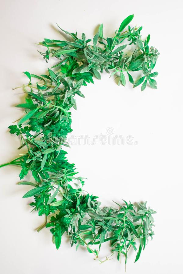 Green alphabet from grass, sprouts and leaves. Seasonal summer letters with. Letter C from green fresh plants royalty free illustration