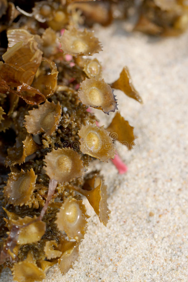 Download Green Anemones On The Beach. Stock Image - Image: 40127985