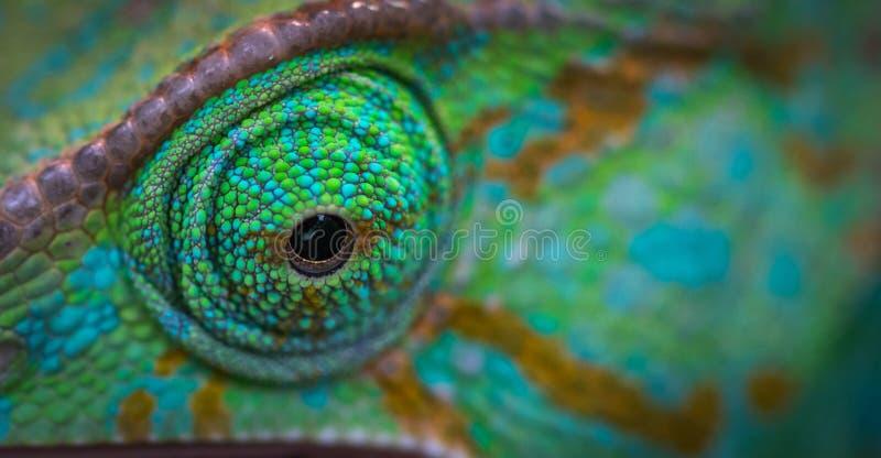 Green Animal Eye royalty free stock image