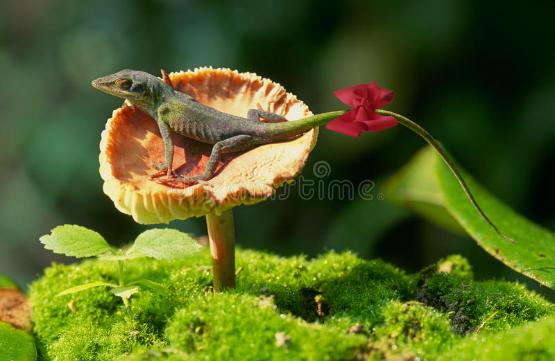 Green anole lizard royalty free stock image