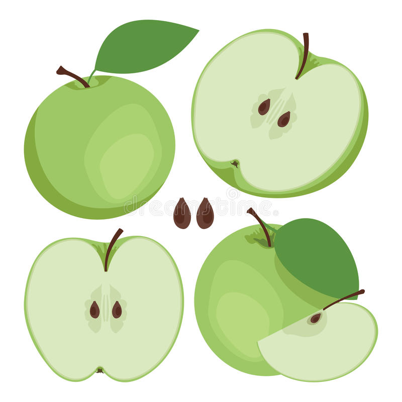 Green apple. Collection of whole and sliced green apple fruits. stock illustration