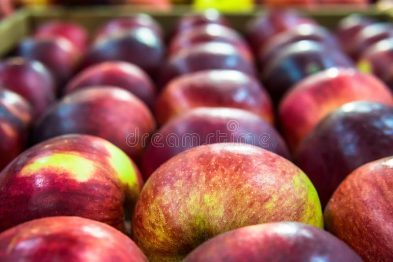 Green apple among a group of red apples. Vertical. Daylight. royalty free stock image