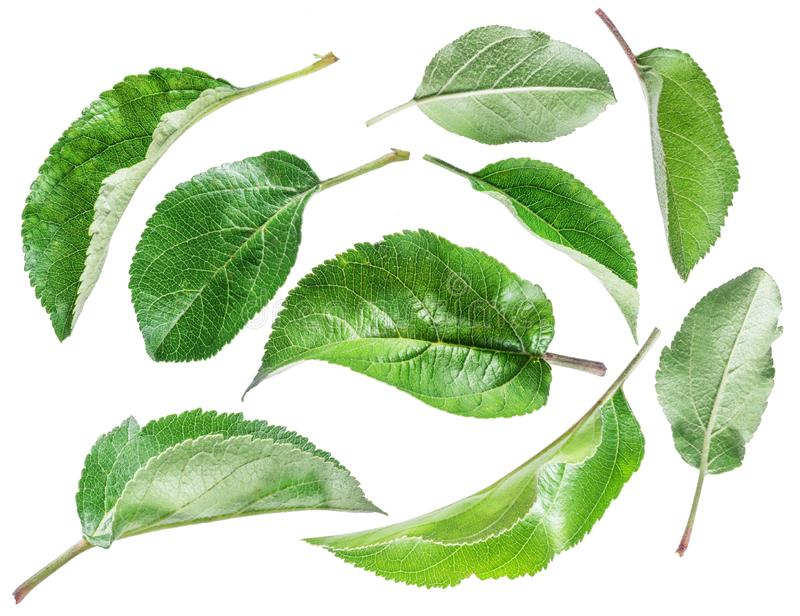 Green apple leaves on the white background.  royalty free stock photos