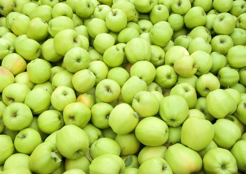 Green apples in bin. Bin of fresh green apples royalty free stock photos
