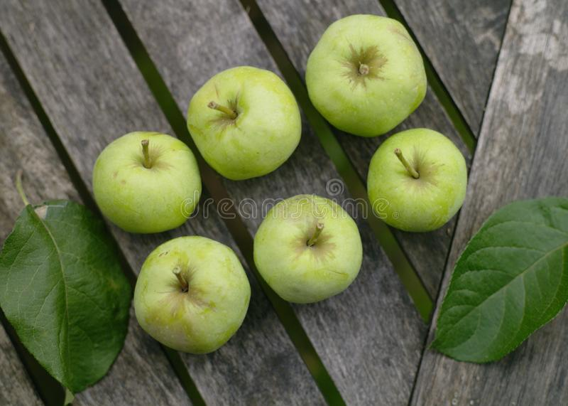 Garden Apples stock image