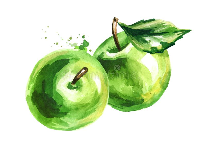 Green Apples. Hand drawn watercolor illustration, isolated on white background stock illustration