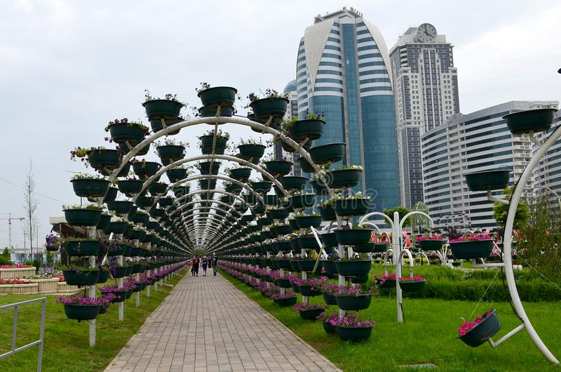 Green arch in the Flower Park of the city of Grozny, Chechnya, Russia. Building of the complex Grozny City in the background stock photo