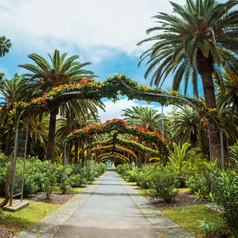 Green arch way in Garcia Sanabria park Santa Cruz de Tenerife, Tenerife, Canary Islands. Amazing view of arch way in Garcia Sanabria park. Location: Cacti garden stock photos