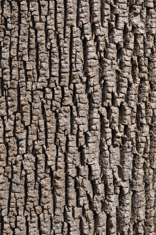 Green Ash Bark. Vertical image of green ash (Fraxinus pennsylvanica) bark stock photos
