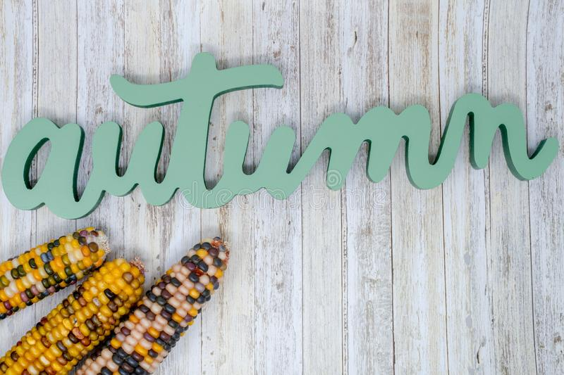 Green Autumn text phrase with colorful husks of indian corn. On wood background, Useful for fall banners and headers stock image