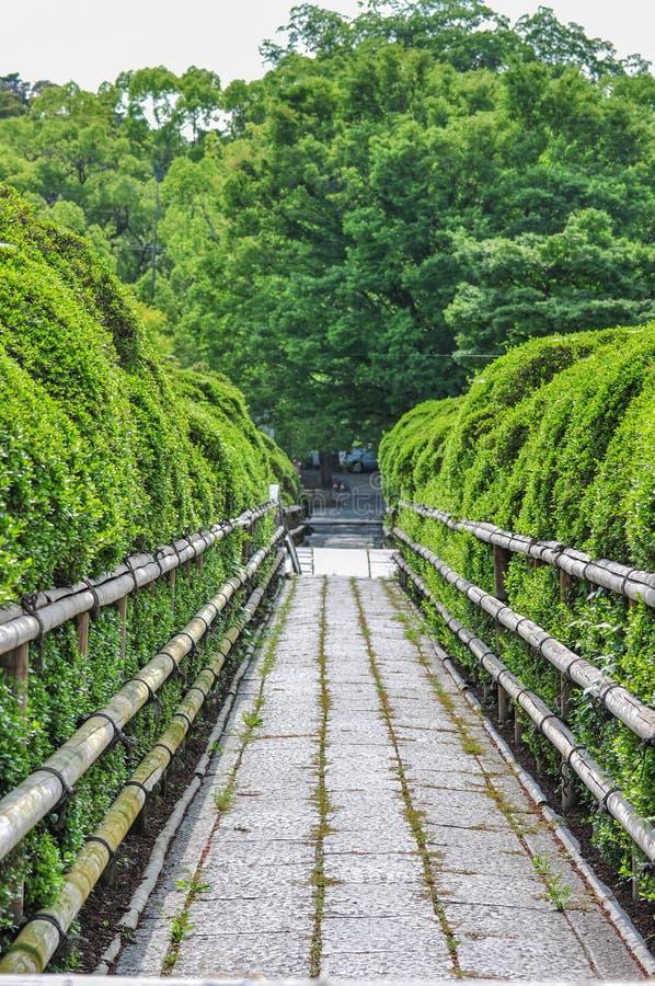 Green avenue of Azalea fence, japanese garden. In Kyoto Japan stock images