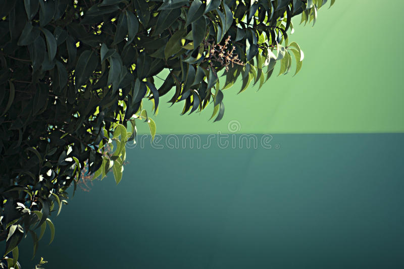 Green Background Leaves stock photo