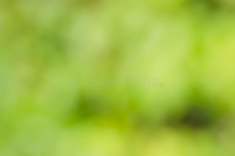 Green backgrounds. stock photo
