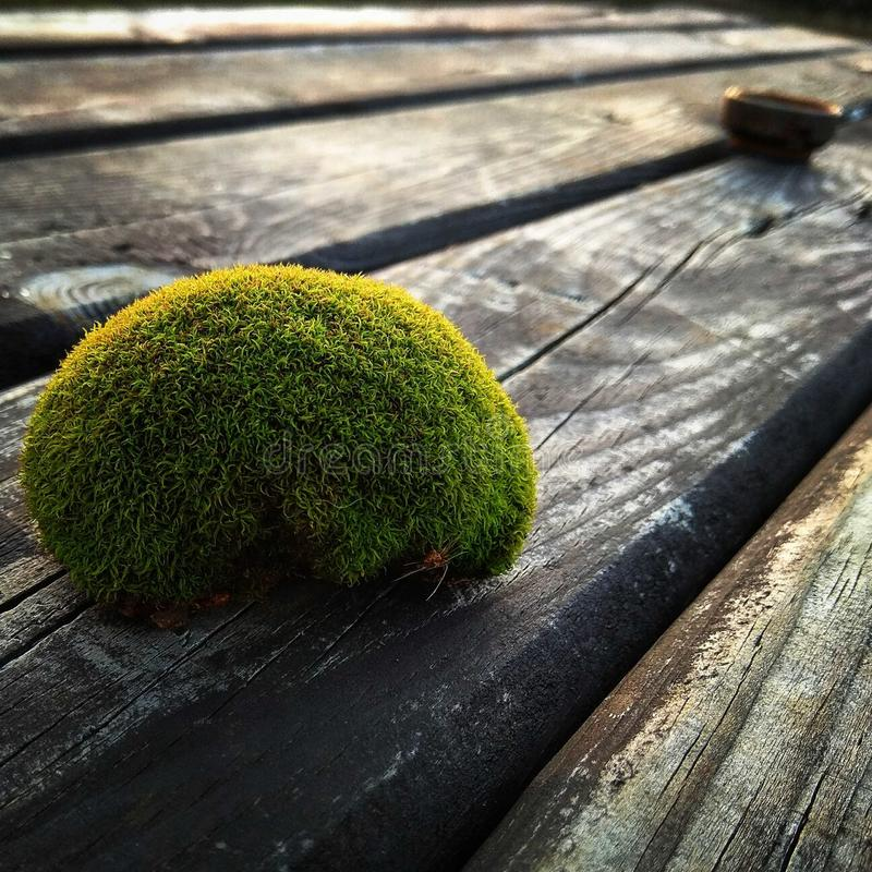 A ball of moss on wooden table. Green ball of moss on wood royalty free stock images