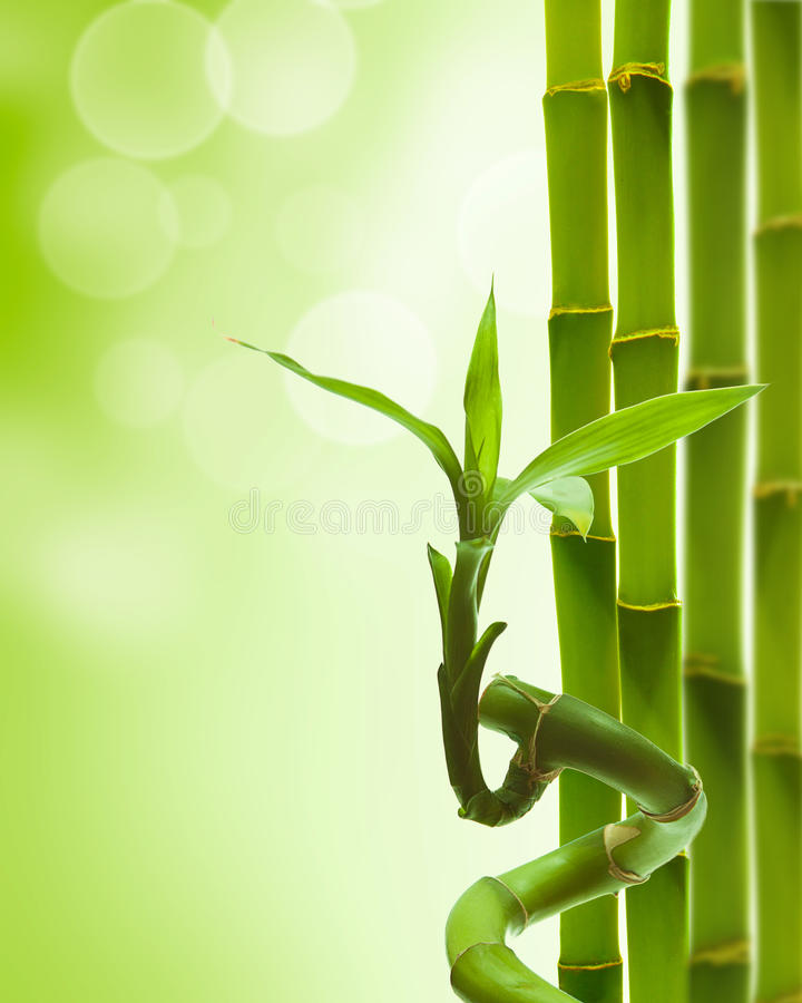 Free Green Bamboo Royalty Free Stock Photo - 19464315