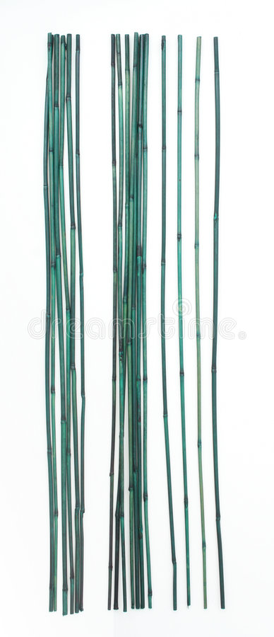 Green Bamboo Stock Image