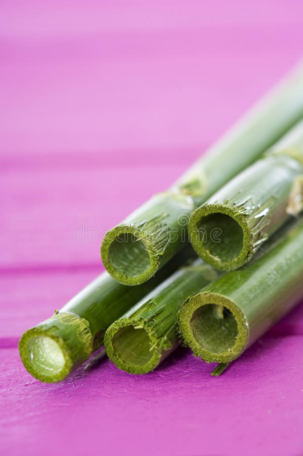 Download Green bamboo stock photo. Image of green, contrast, easter - 29308512