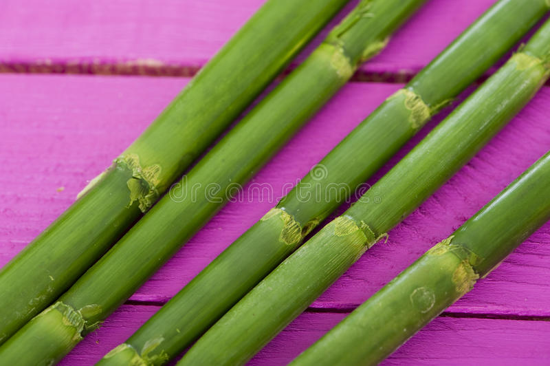 Download Green bamboo stock image. Image of mother, light, decorative - 29308523