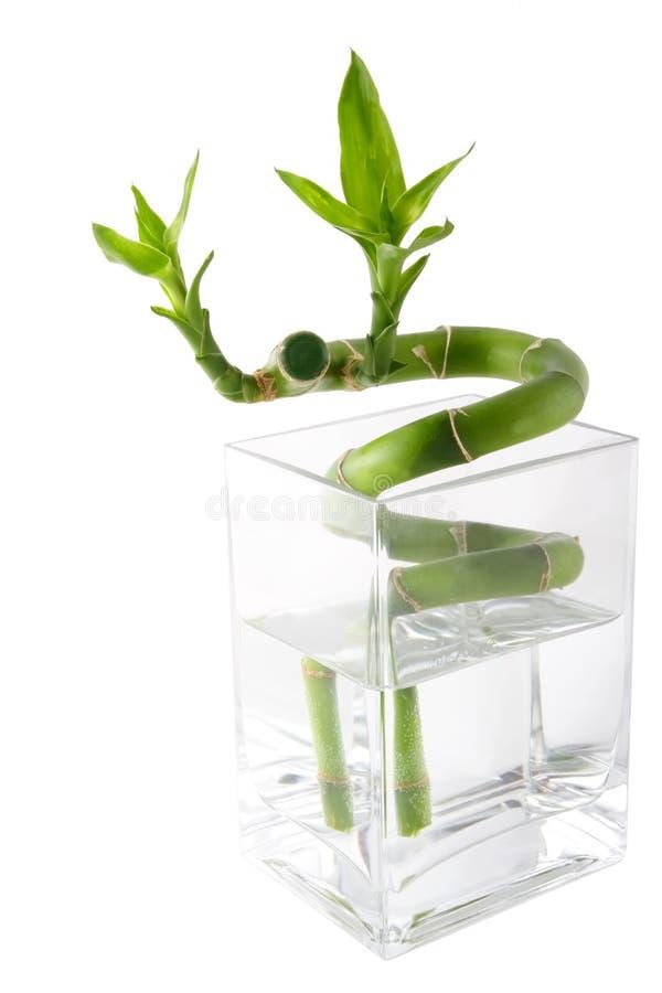 Download Green Bamboo Royalty Free Stock Photo - Image: 3772935
