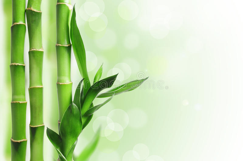 Green bamboo background stock image image of culture for Fond ecran gratuit zen