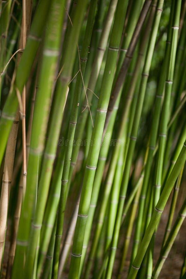 Green Bamboo Background Stock Photo