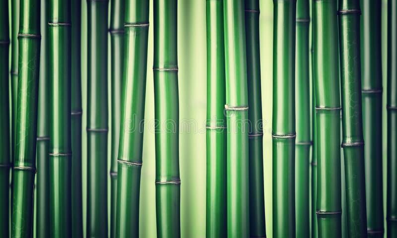 Green bamboo background. Closeup of chinese green bamboo stock image