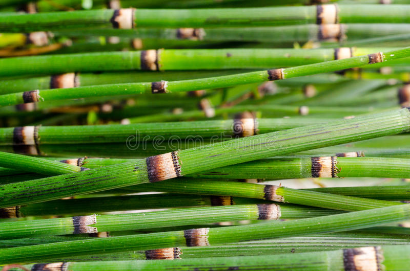 Download Green bamboo close-up stock photo. Image of leaf, close - 26966868
