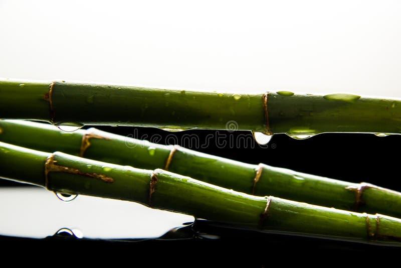 Green bamboo drops