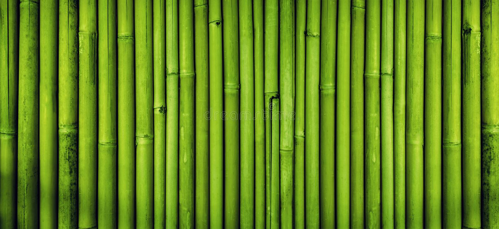 Green bamboo fence texture background, bamboo texture panorama royalty free stock photos
