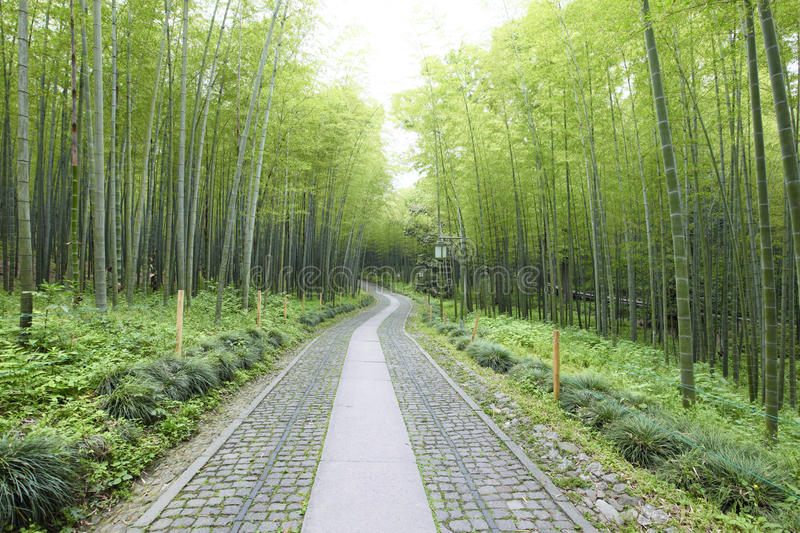 Download Green Bamboo Forest stock photo. Image of light, freshness - 19750850