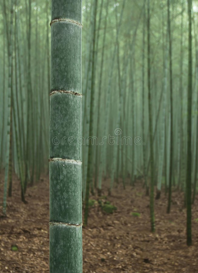 Download Green bamboo forest stock photo. Image of plant, leaf - 22443658