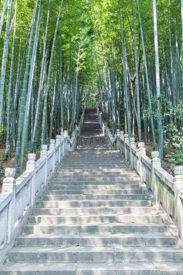 Green bamboo forest and stone steps stock images