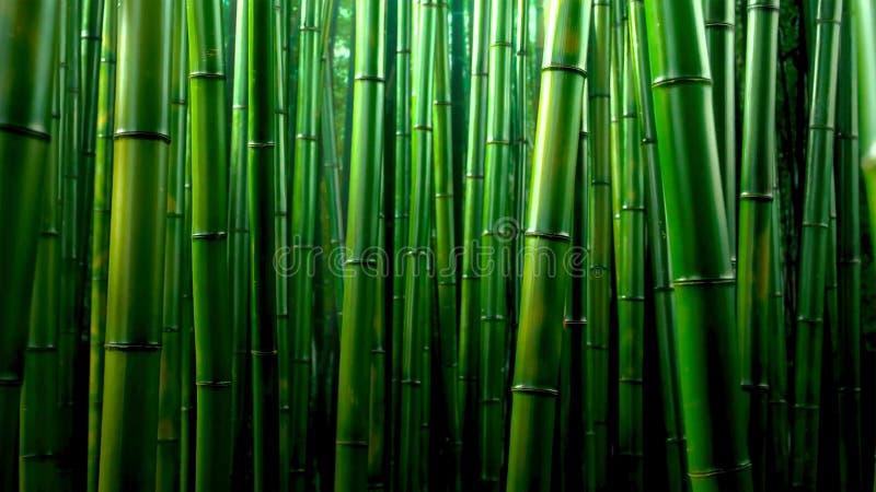 Green bamboo forest texture background, bamboo texture panorama stock photos