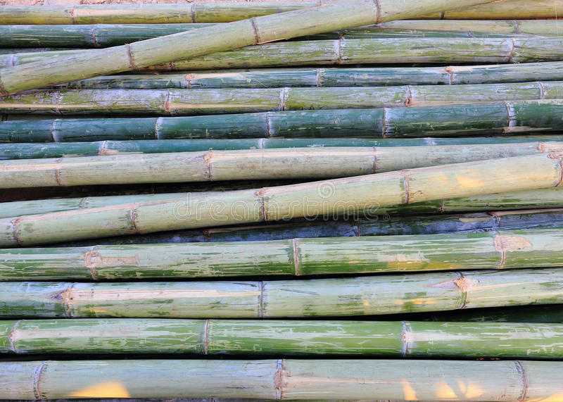 Download Green bamboo stock image. Image of bark, texture, plant - 42391987