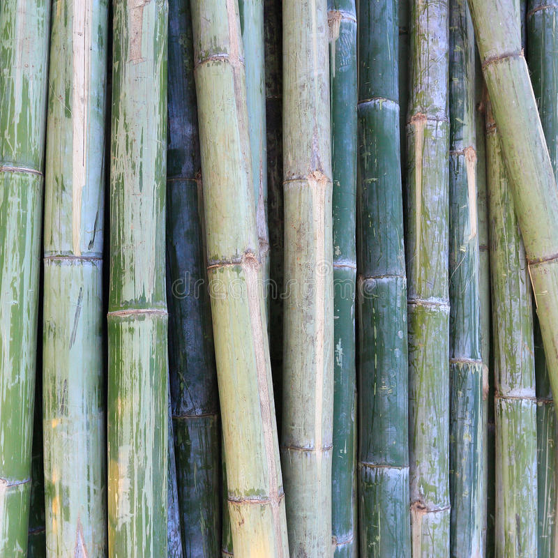 Download Green Bamboo Stock Photo - Image: 42661708