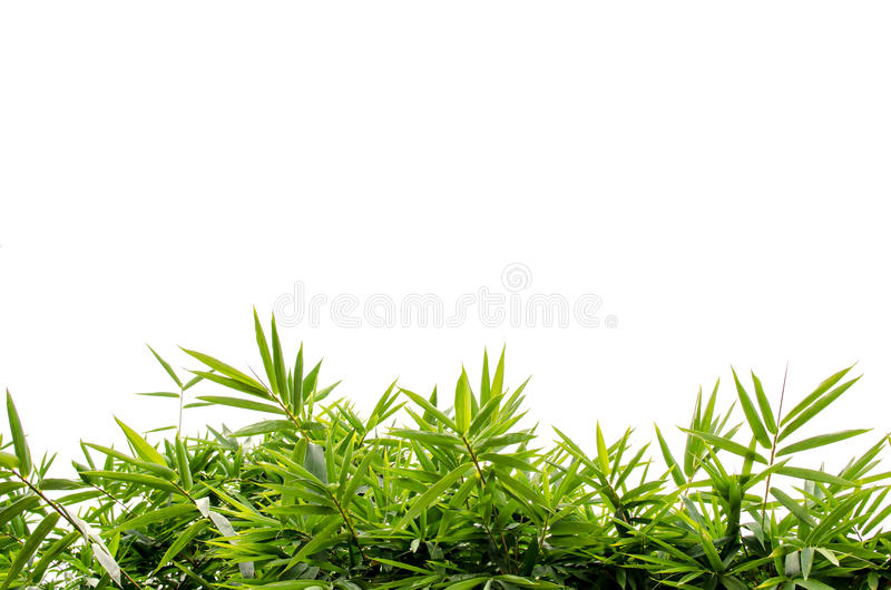 Download Green Bamboo Royalty Free Stock Photography - Image: 35623897