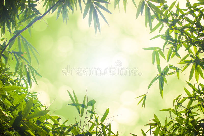 Green bamboo leaves or with background .Green Energy.bokeh spring summer chistmas holiday. stock images