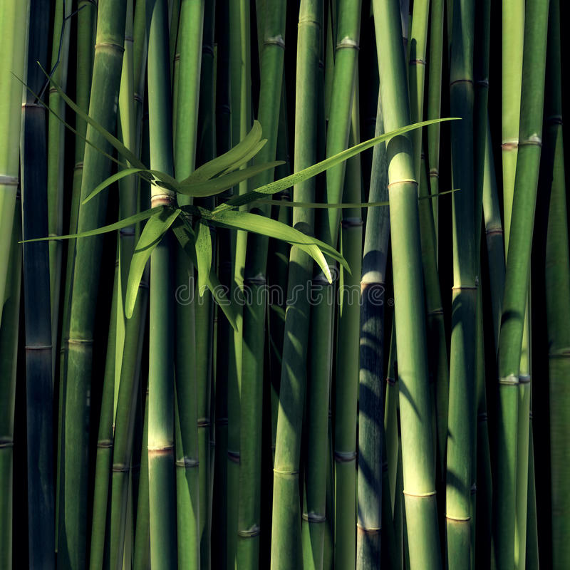 Download Green Bamboo stock illustration. Image of green, plant - 34551520