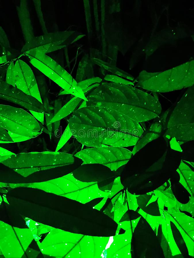 Green bamboo leaves with  green lighting flare and flash. stock photo